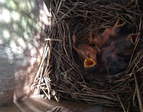 スピリチュアル 雀の鳴き声 鳥が知らせる幸運のサインを読みとる